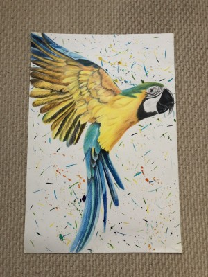 56x38cm coloured pencil drawing of a macaw parrot
