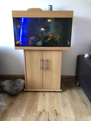 Fish tank with 9 goldfish