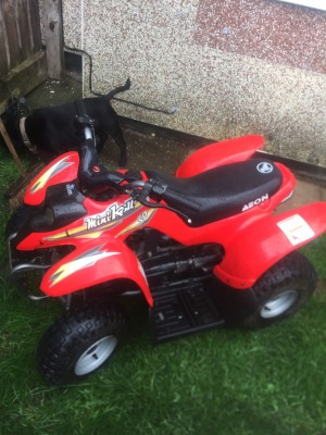 50cc quad bike electric and kick start