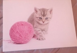 Cute cat canvas