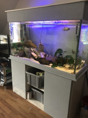 Large tropical fish tank included filter and fish